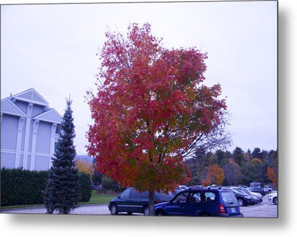 Parked Under Red Tree Metal Print by Dick Willis