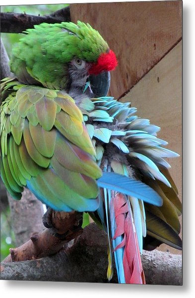 Parrot Feathers Metal Print by Loretta Pokorny