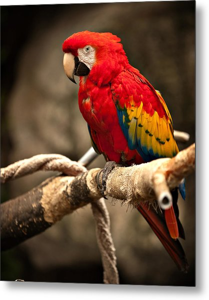Parrot Metal Print by Kerri Garrison