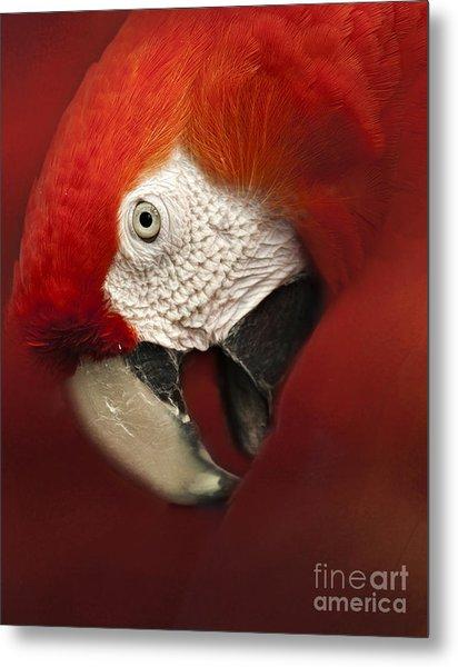 Parrot Portrait Metal Print