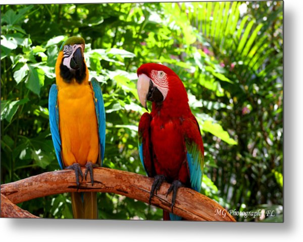 Parrot's Perch Metal Print