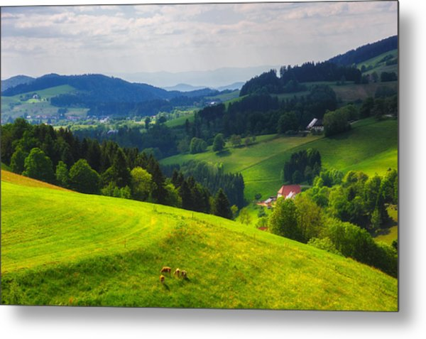 Partly Sunny At Black Forest Metal Print