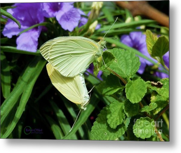 Passion Of The Butterflies Metal Print
