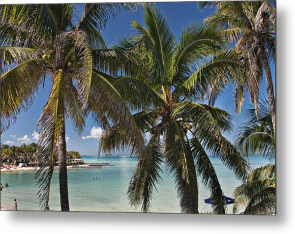 Past The Palms Metal Print