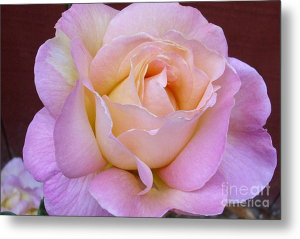 Pastel Rainbow Rose Metal Print