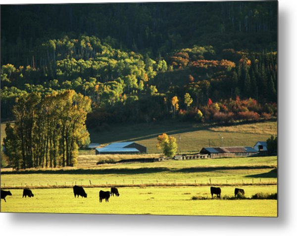Pastoral Ranch Lands In Colorado Metal Print