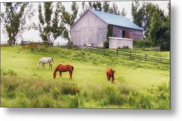 Metal Print featuring the photograph Pasture by Garvin Hunter