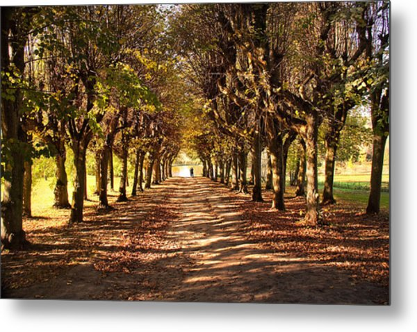 Path 3- Ostromecko Gardens Metal Print