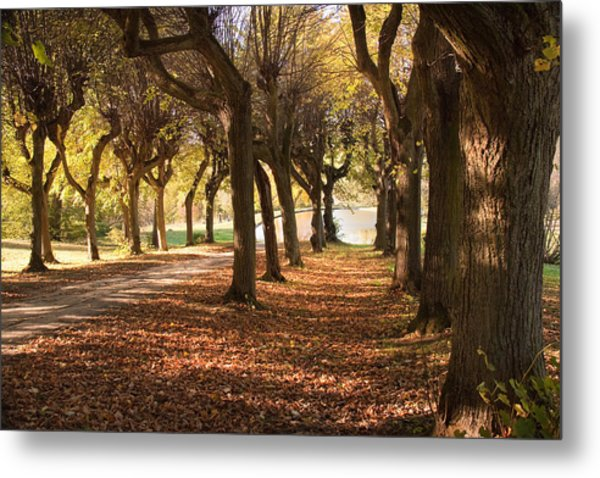 Path 5 - Garden Photography Metal Print
