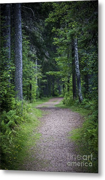 Path In Dark Forest Metal Print
