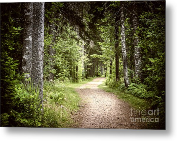 Path In Green Forest Metal Print