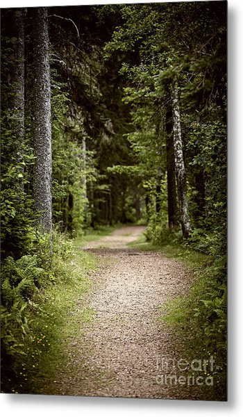 Path In Old Forest Metal Print