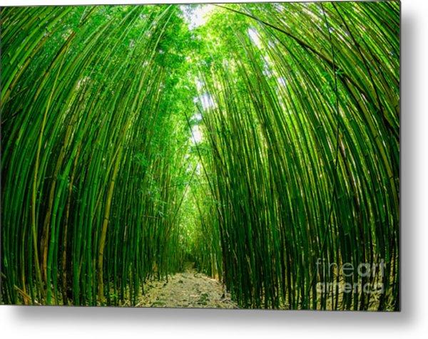 Path Through A Bamboo Forrest On Maui Hawaii Usa Metal Print