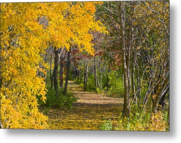 Path Through Autumn Trees Metal Print