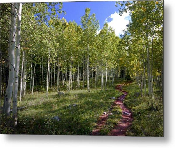 Path Through The Aspens In Colorado Metal Print