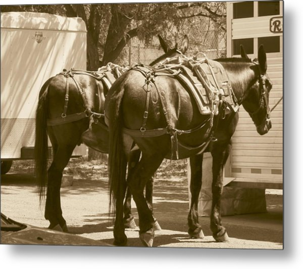 Patient Pack Mules Metal Print