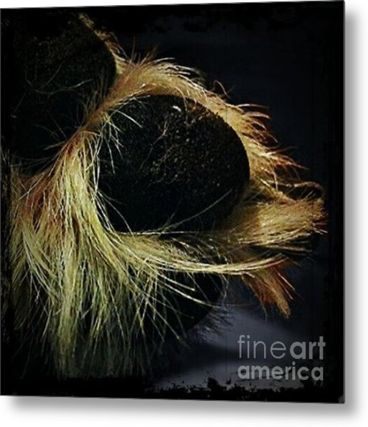 Paws For Thought #dogs Metal Print