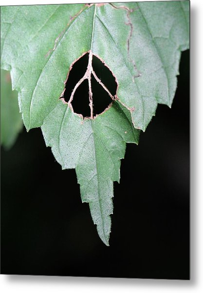 Peace For The Planet Metal Print