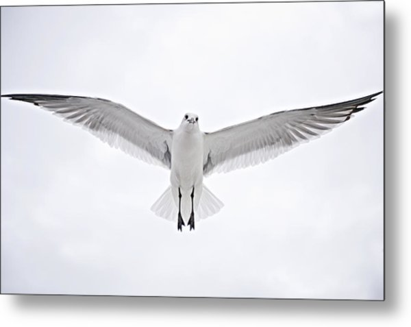 Peace On Earth  Good Will To Men Metal Print by Bonnie Barry