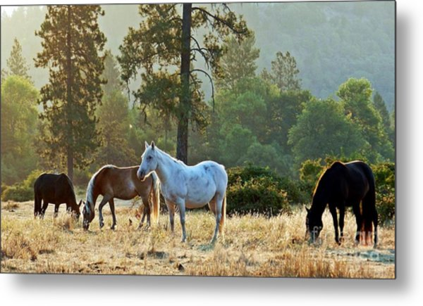 Peaceful Dawn Metal Print