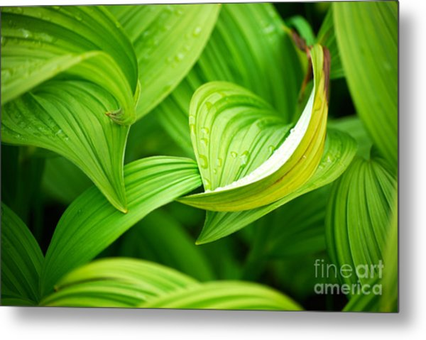 Peaceful Green Metal Print