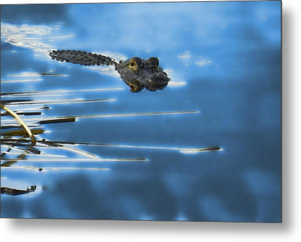 Metal Print featuring the photograph Peaceful Predator by Grace Dillon