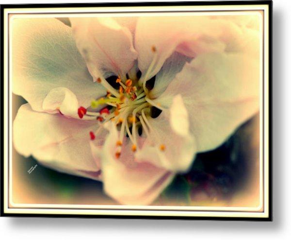 Peach Flower Metal Print
