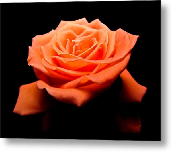Peachy Rose II Metal Print