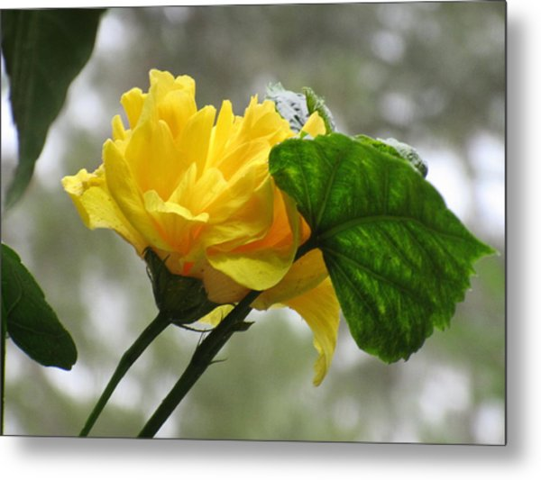Peachy Yellow Surprise Metal Print