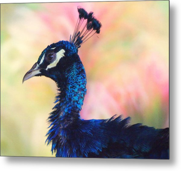 Peacock And Pink Metal Print by DerekTXFactor Creative