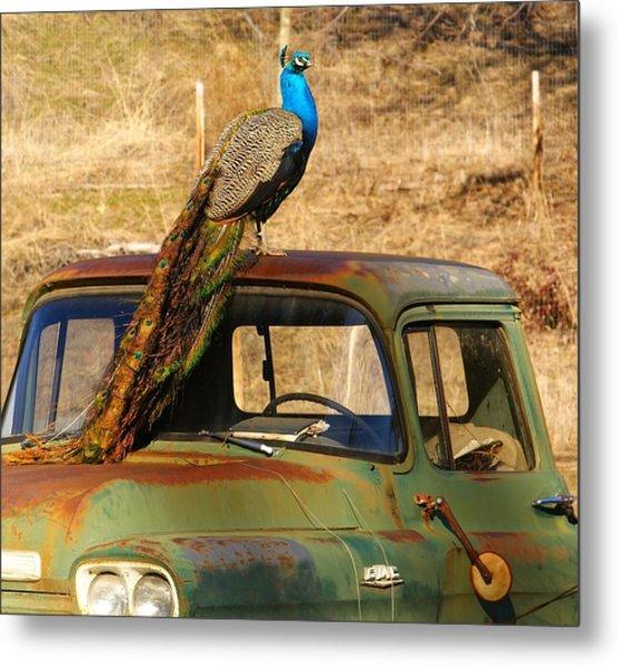 Peacock On Old Gmc Truck 3 Metal Print
