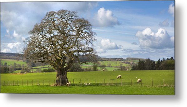 Peak District Tree Metal Print