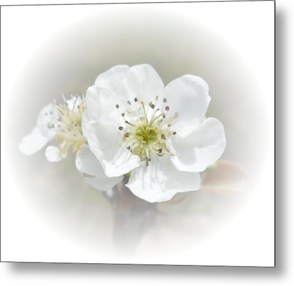 Metal Print featuring the photograph Pear Blossom by Judy Hall-Folde