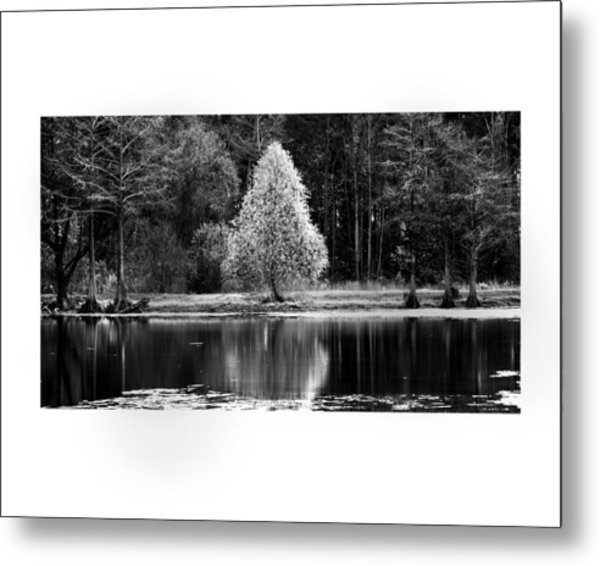 Pear Tree Metal Print by Jerry Cook