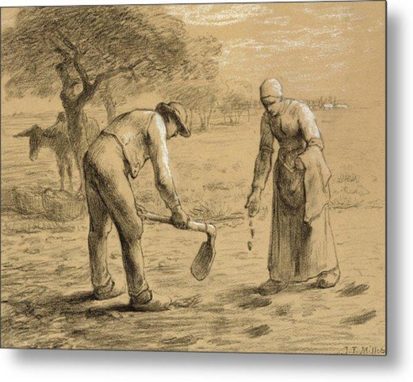 Peasants Planting Potatoes  Metal Print
