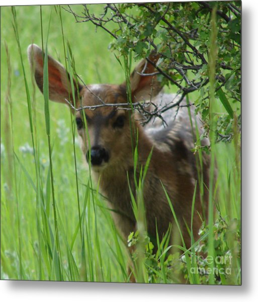 Playing Peek A Boo In Evergreen Colorado Metal Print