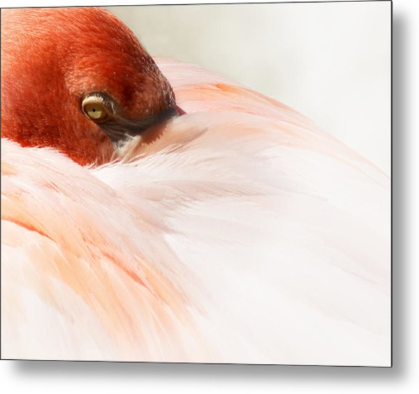 Peek-a-boo Metal Print by Wayne Wood