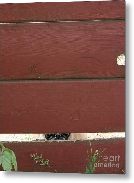Metal Print featuring the photograph Peeking by Cynthia Marcopulos