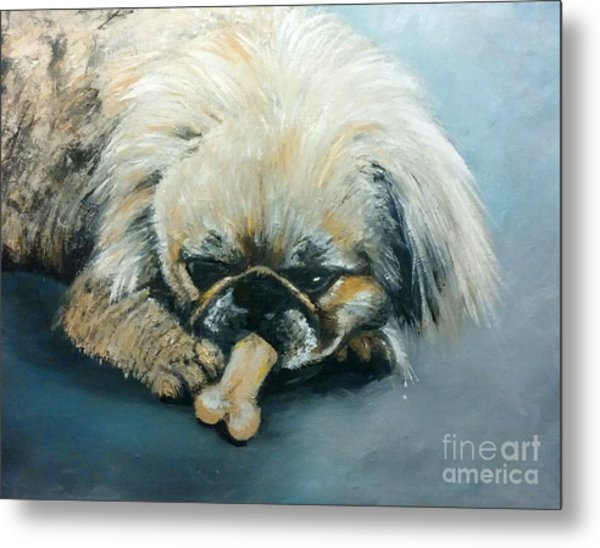 Pekinese And The Bone Metal Print