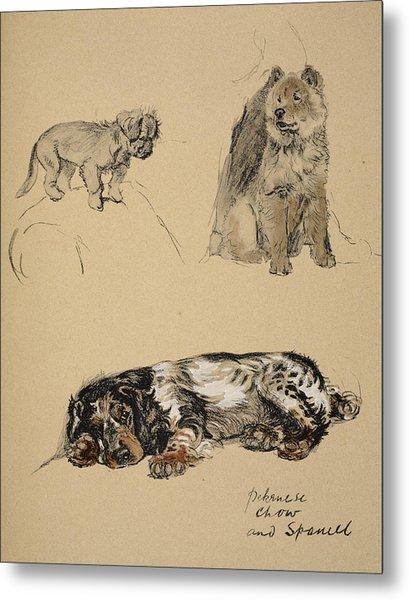 Pekinese, Chow And Spaniel, 1930 Metal Print