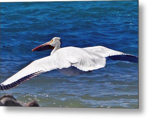 Pelican At Pyramid Lake Metal Print