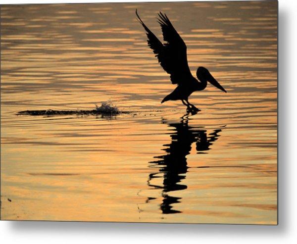 Pelican At Sunrise Metal Print