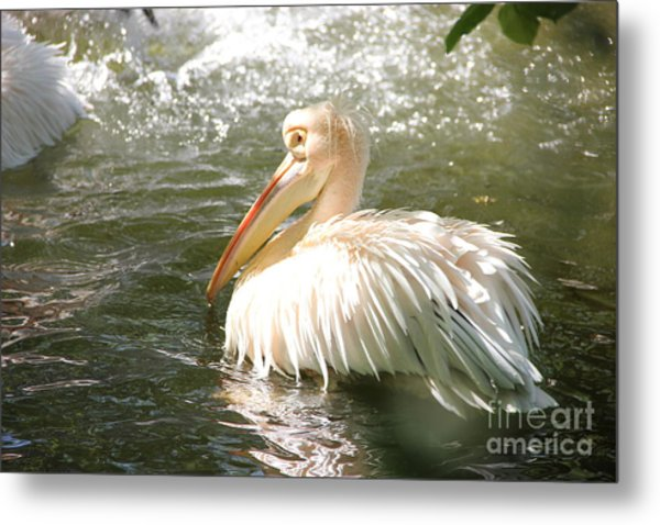 Pelican Bath Time Metal Print