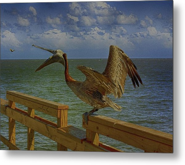 Pelican Eating Metal Print