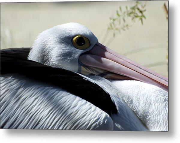Pelican Eye Metal Print by Graham Palmer