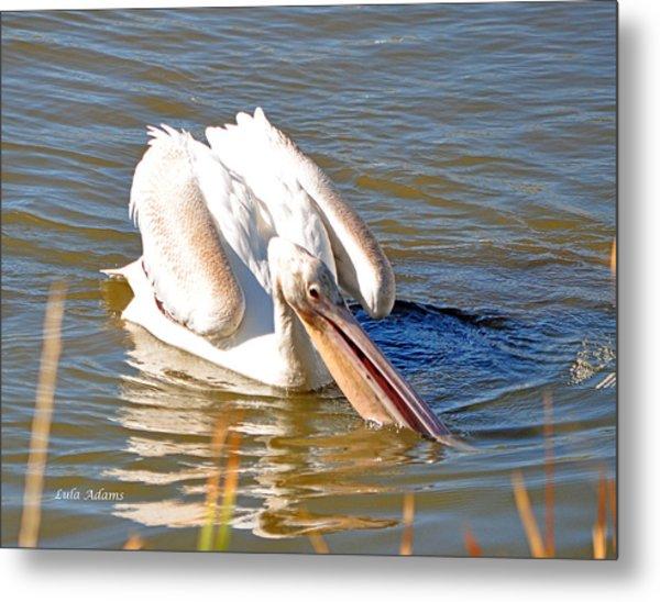 Pelican Fishing Metal Print
