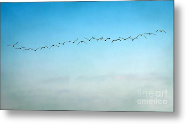 Pelican Flight Line Metal Print