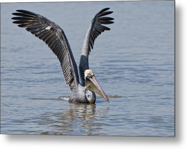 Pelican On Bayou Du Large Metal Print by Bonnie Barry
