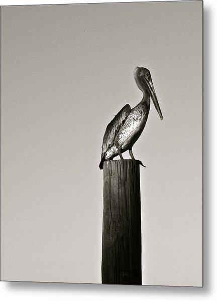 Pelican Piling Metal Print