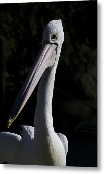 Pelican Portrait Metal Print by Graham Palmer